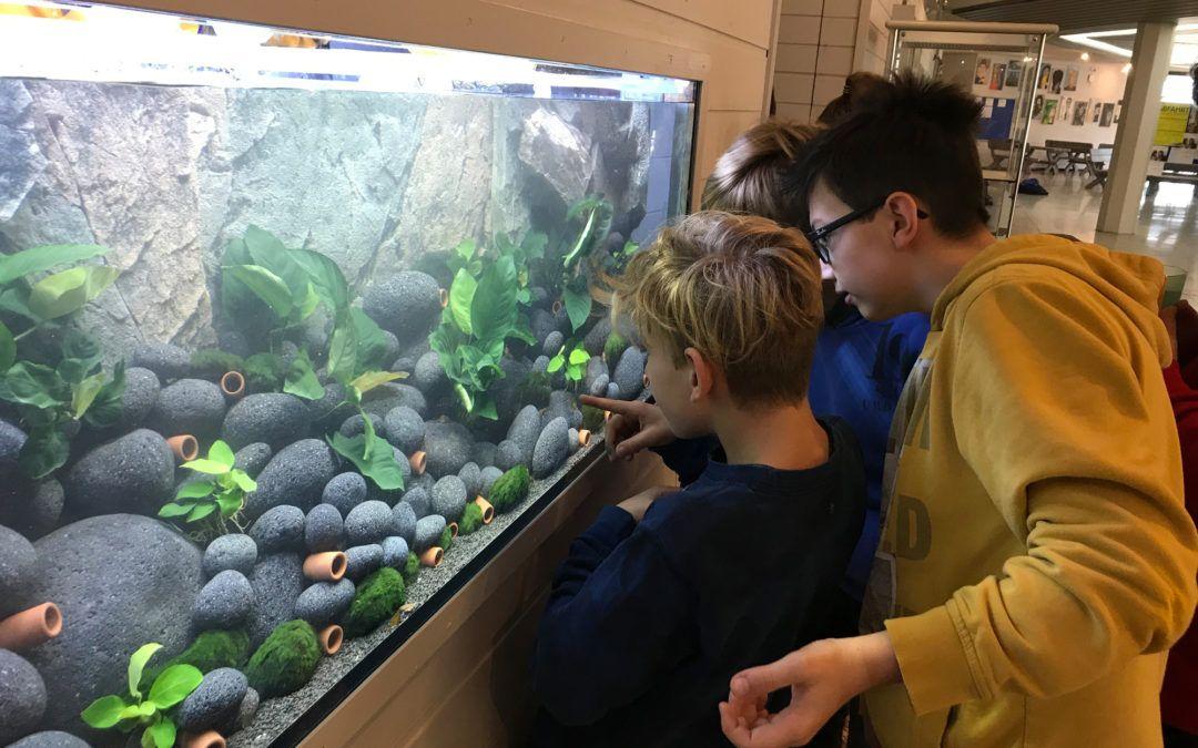 Einrichtung des dritten Aquariums